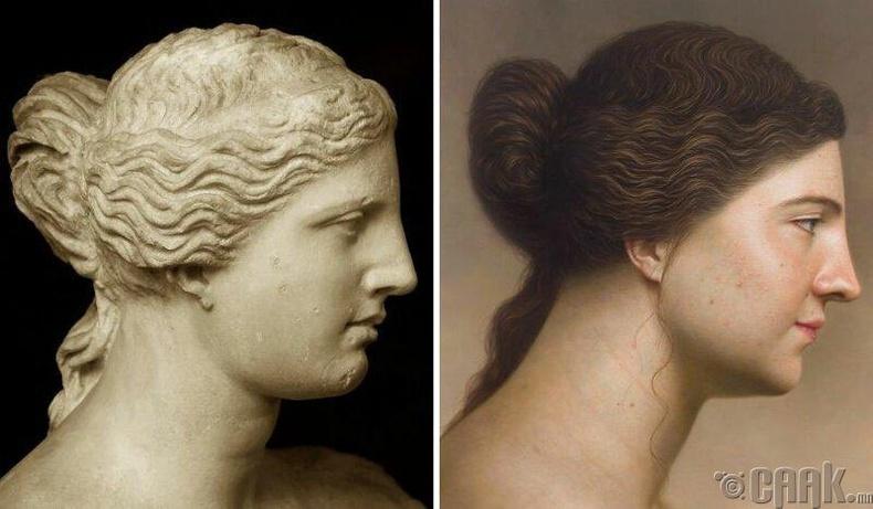 Венус (Venus)