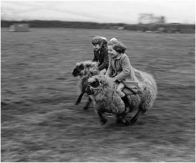 Хурдан хонины уралдаан - Уэльс, 1965 он