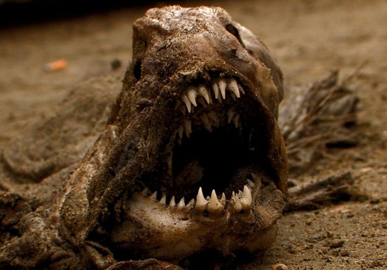 Сүүлийн үед илрүүлсэн аймшигтай амьтад