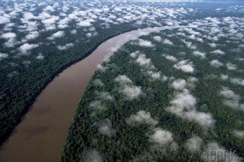 Амазоны ширэнгэн ой, Венесуэл