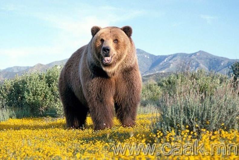 Дэлхий дээрх хамгийн том амьтад