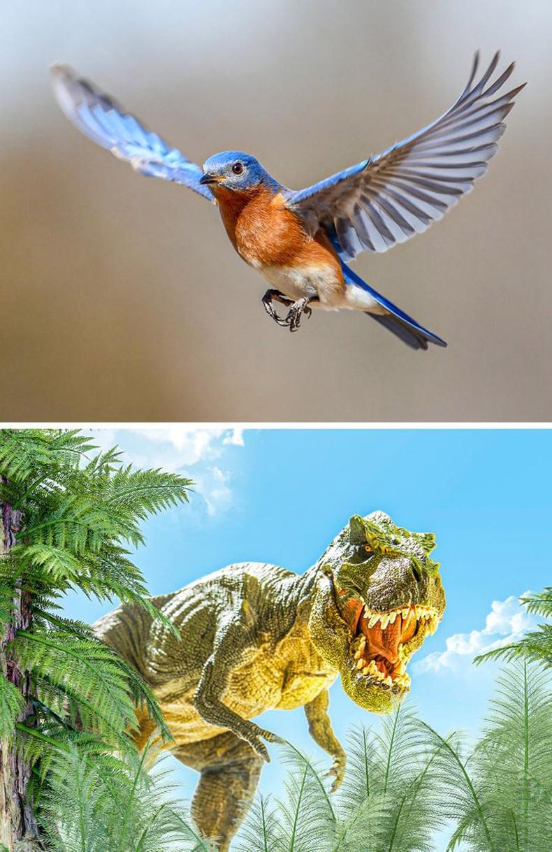 Шувуу ба үлэг гүрвэл