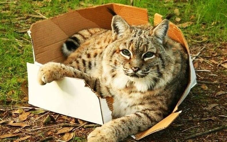Хайрцаг байвал ороод суучихна гэж мэд.