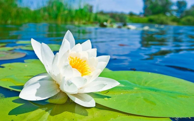 Дэлхийн хамгийн гоё цэцгүүд