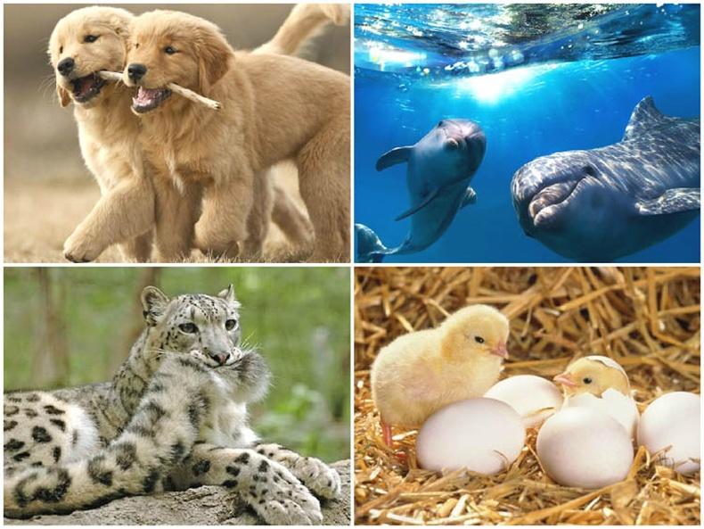 Амьтдын тухай сонирхолтой баримтууд