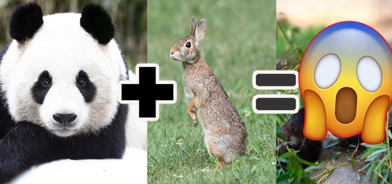 Амьтад дээр хийсэн аймшигт 10 туршилт