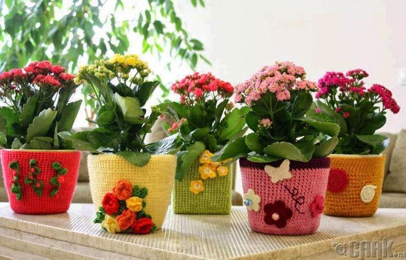 Цэцэг ногоо тарьж ургуулах
