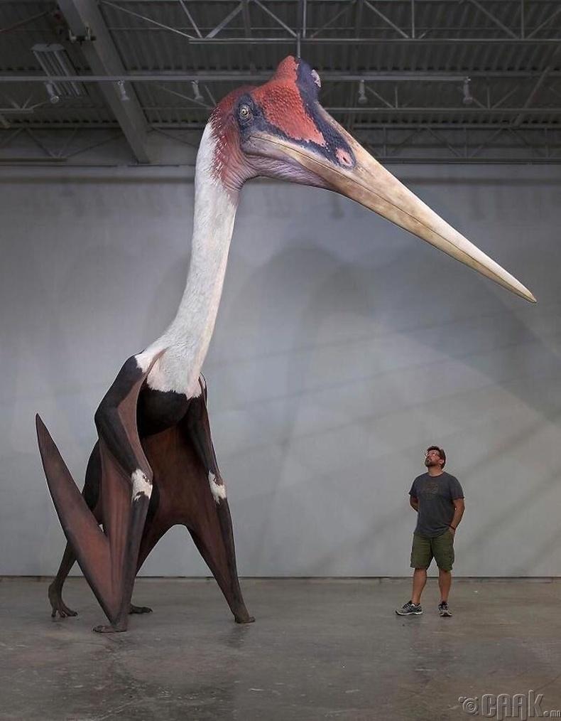 Түүхэн дэх хамгийн том шувууны дэргэд