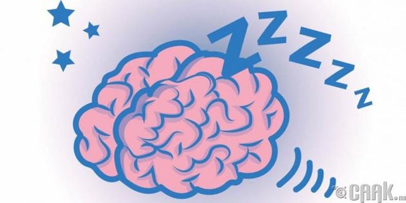Унтаж байхад ч тархи идэвхтэй ажиллаж байдаг