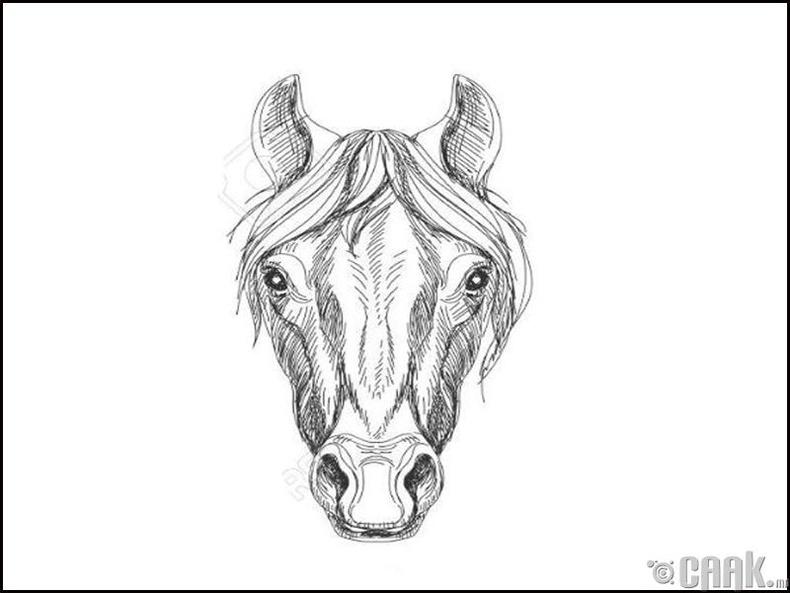 Морь жилтнүүдийн зан араншин