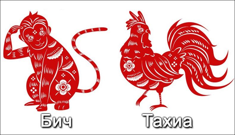 Бич, Тахиа жилтний 2019 оны ерөнхий зурлага