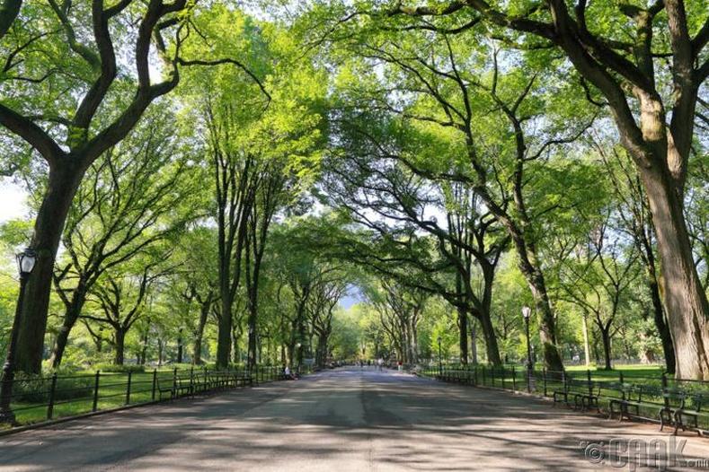 Төв цэцэрлэгт хүрээлэн, Нью-Йорк