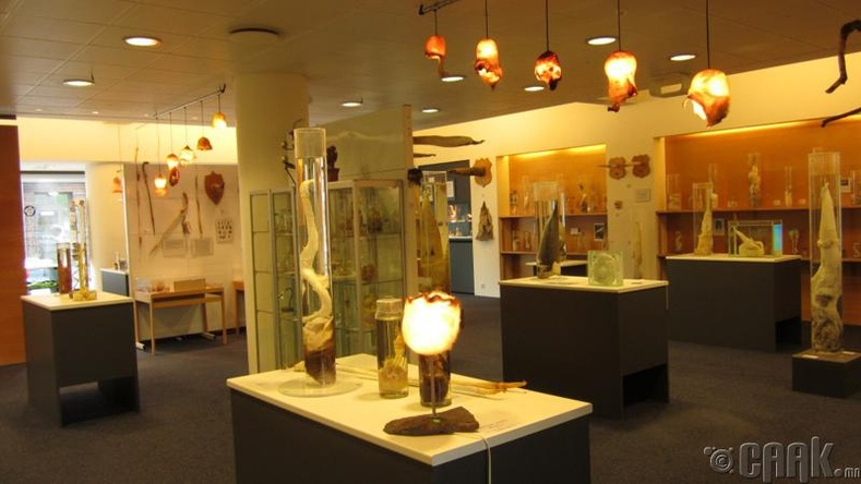 Эр бэлэг эрхтний музей