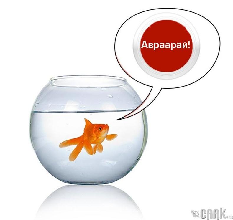 Загасыг бөөрөнхий аквариумд хийж болохгүй