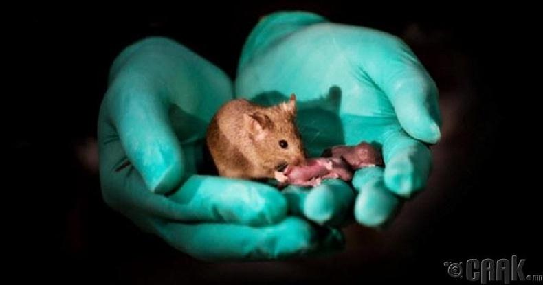 Эцэггүй хулганууд
