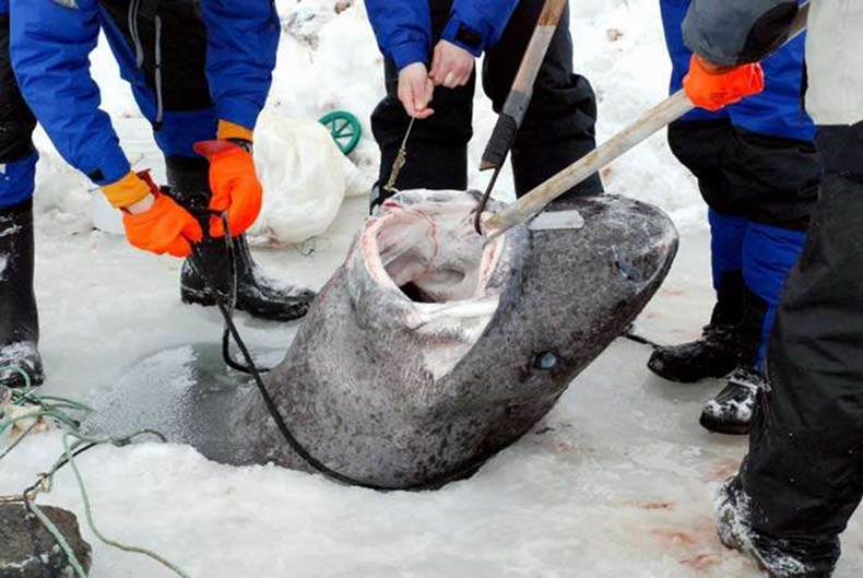 Эрдэмтэд Хойд Атлантаас 500 гаруй жилийн настай аймшигтай амьтан олжээ