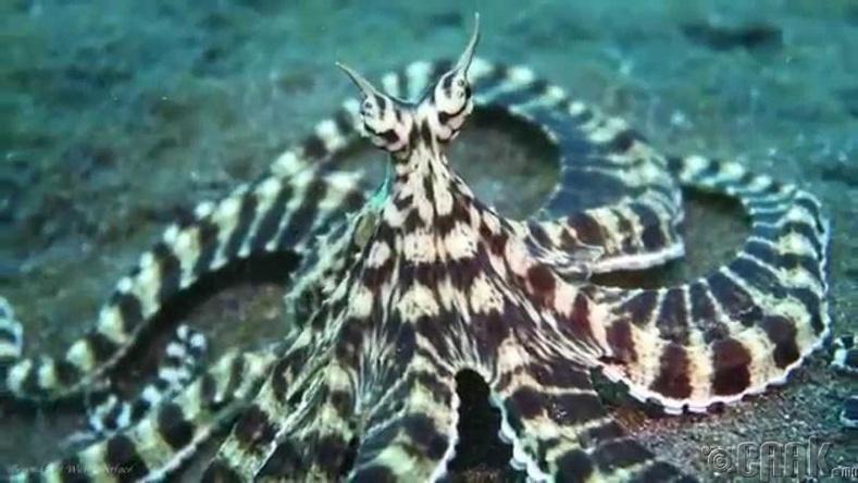 Элэглэгч наймаалж