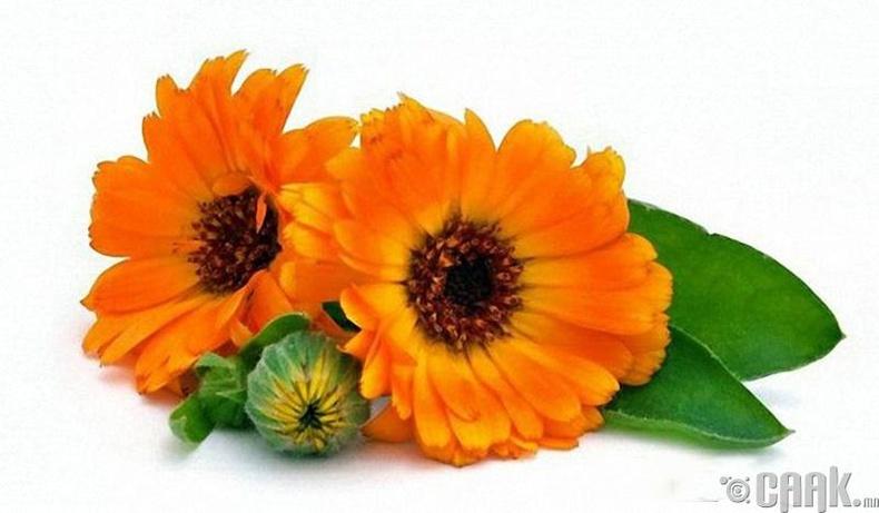 Календула цэцэг