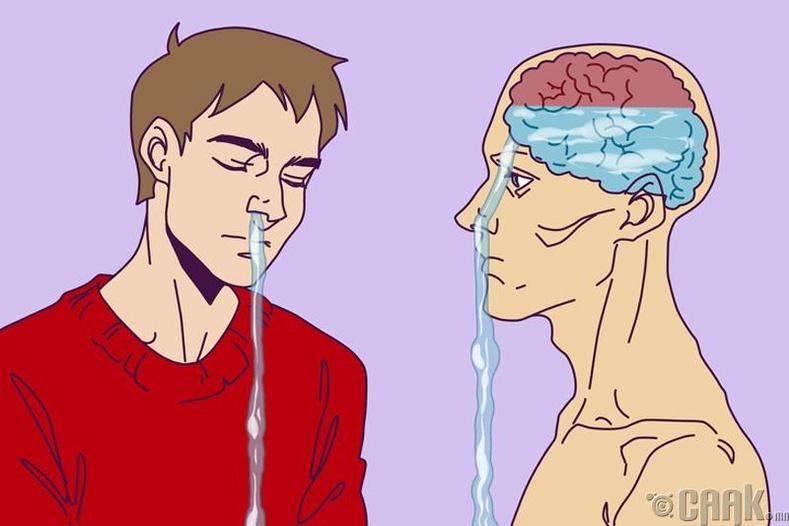 Хамраас гарч байгаа шингэн тархинаас гарч байж ч мэднэ
