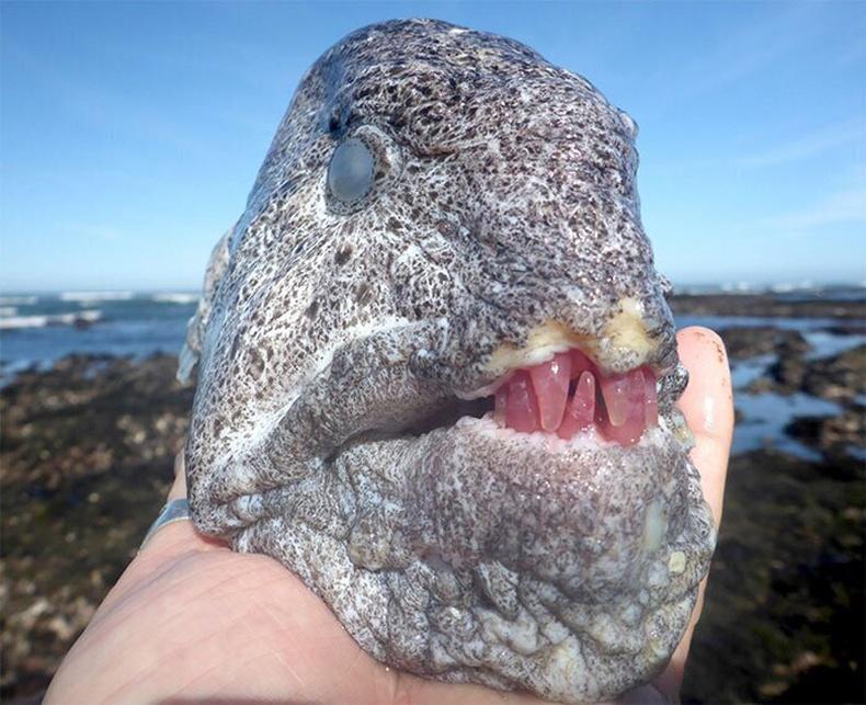 Далайн эрэг дээрээс олдсон загас