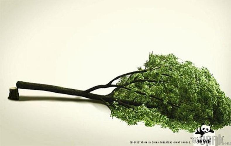 Ой модыг сүйтгэх нь хулсны баавгайг аюулд оруулж байна