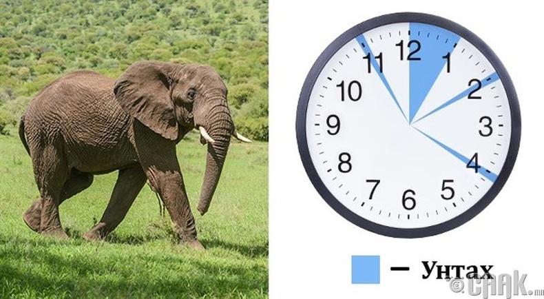 Хүн бүхэн - 2.5 цаг