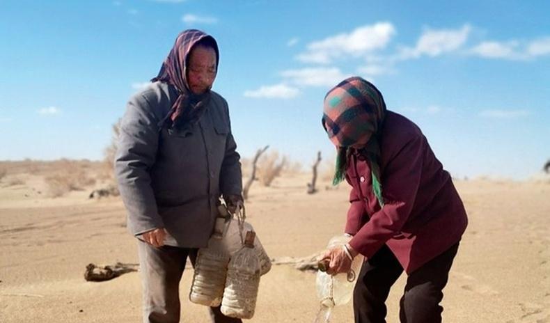 Цөлийг баянбүрд болгохын төлөө амьдралынхаа 20 жилийг зориулсан Өвөр Монгол хос