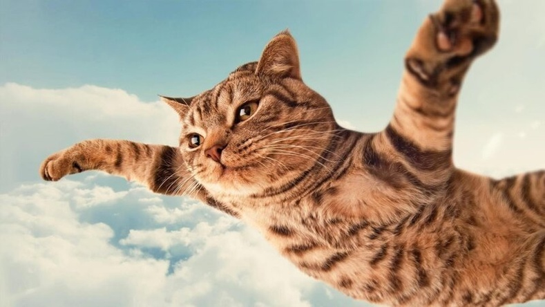"""Муур """"долоон голтой"""" байдгийн шалтгаан"""