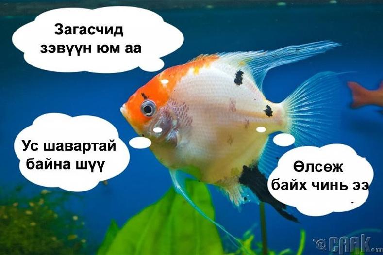 Загас сэтгэл хөдлөлтэй