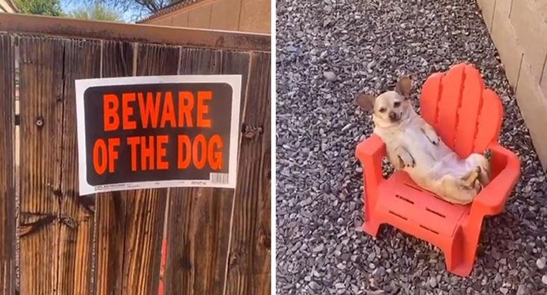 Анхаар: Нохойтой! - Байгаа нохой нь.