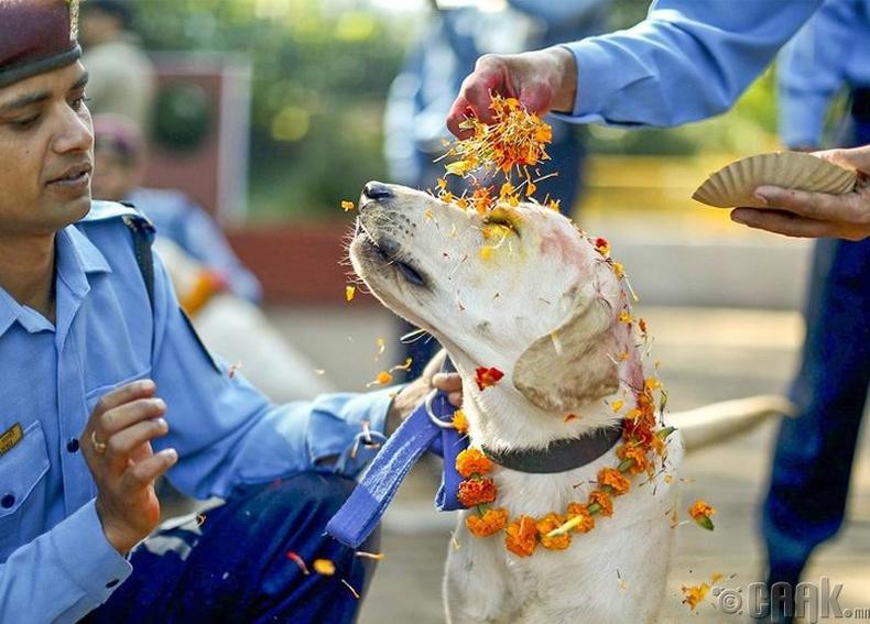 Нохойнд талархал илэрхийлэх наадам