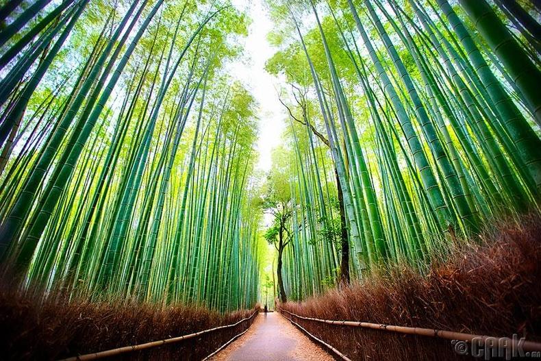 Японы хулсан ой