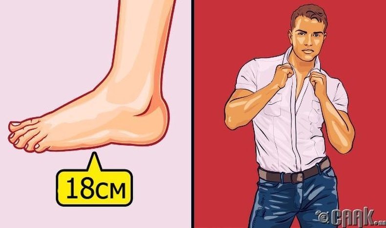 Эр хүний бэлэг эрхтний хэмжээг хөл, гарын хэмжээгээр мэдэх боломжгүй