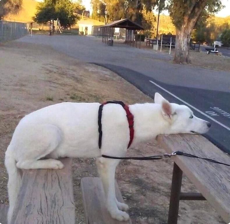 Зогсох, суух, хэвтэхийн завсар буй нохой