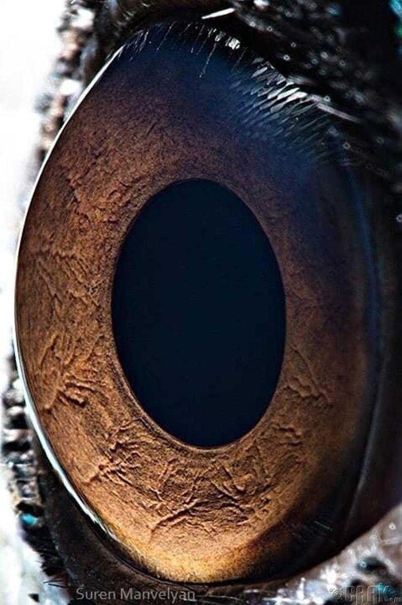 Тогосны нүд бүтэн эргэдэг