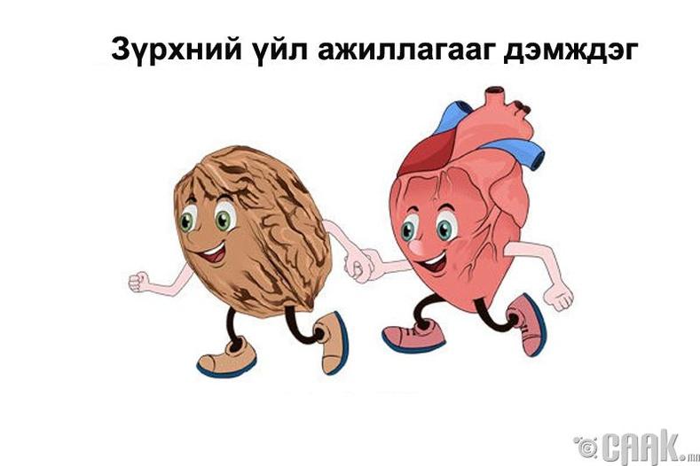 Зүрхний өвчнөөс сэргийлдэг