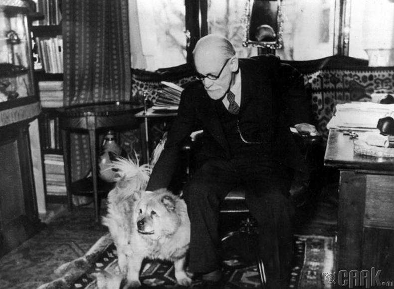 Зигмунд Фрейд (Sigmund Freud)ажлын өрөөндөө өөрийн нохой Жофигийн хамтаар