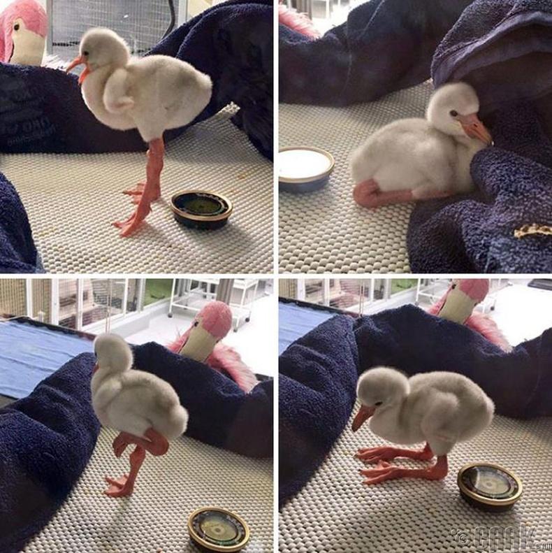 Бяцхан Фламинго