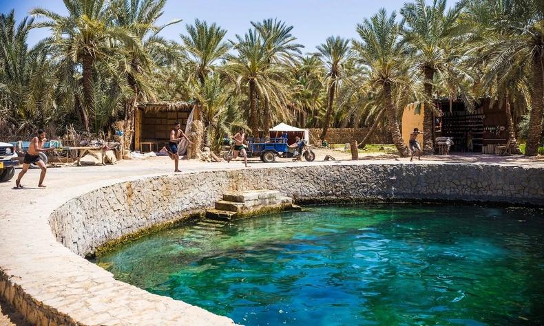Сива баянбүрд, Египет