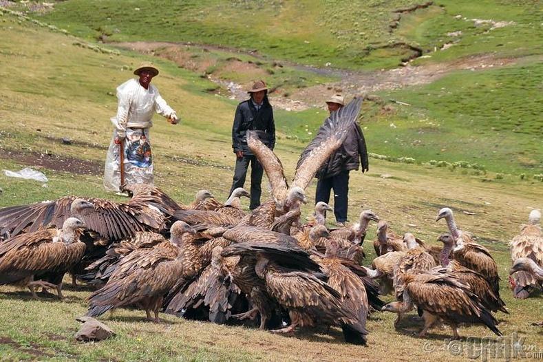 Төвдийн тэнгэрийн оршуулга - Цогцсыг нь махчин шувуунд тавих