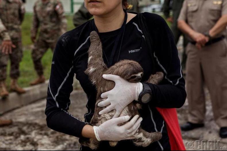 АНУ-д хууль бус амьтны хүрээлэнгийн үйл ажиллагааг зогсоож байна