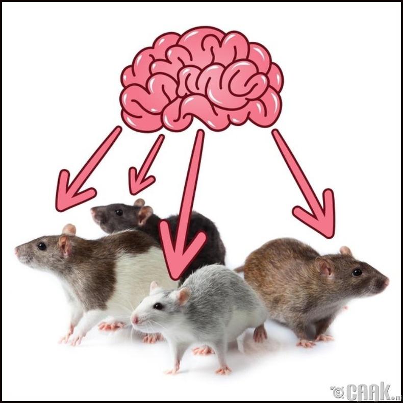 Бид 4 хархны тархийг нэгтгэсэн
