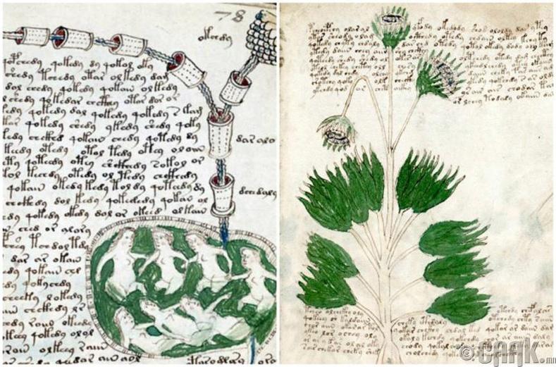 """""""Voynich""""-ийн гар бичмэл"""