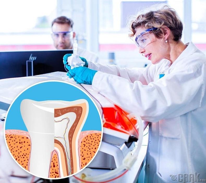 Шүдний үүдэл эс гэж юу вэ?