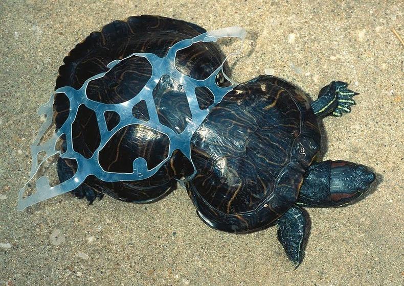 Хог хаягдал амьтдын өсөлт хөгжил, амь амьдралд нь заналхийлж байна.
