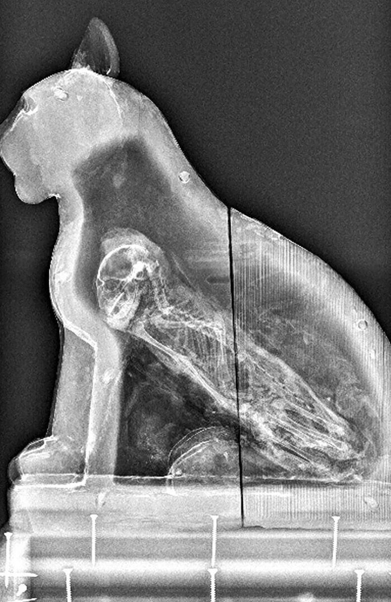 Эртний Египетийн муурын баримал дотор жинхэнэ муурын мумми байжээ