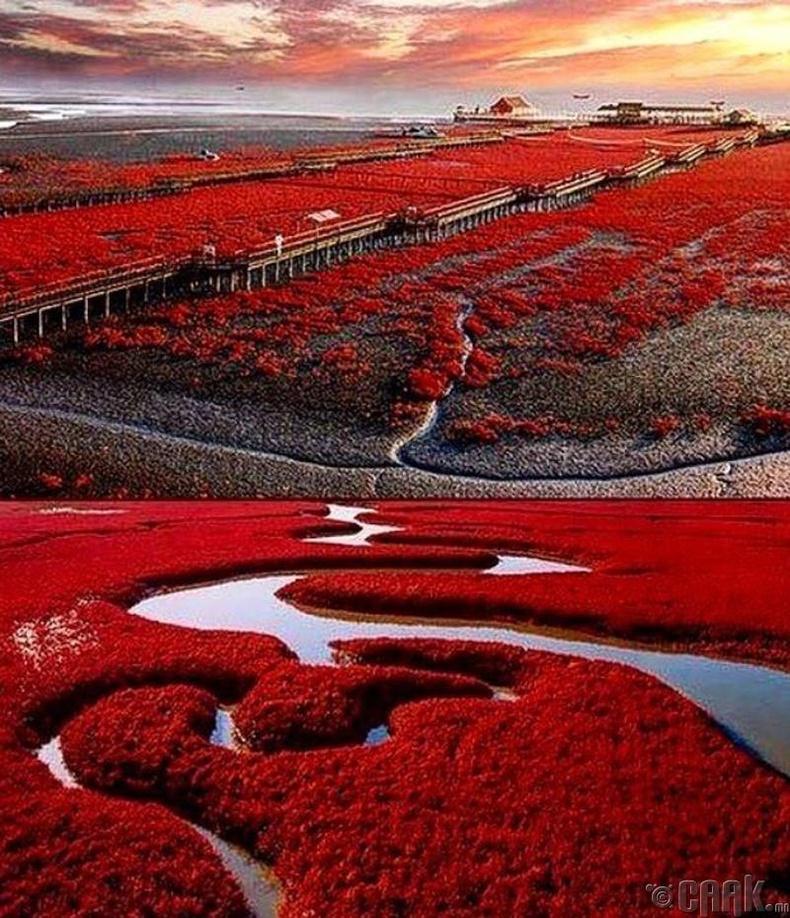 """""""Паньзин-ийн улаан эрэг"""", Хятад"""