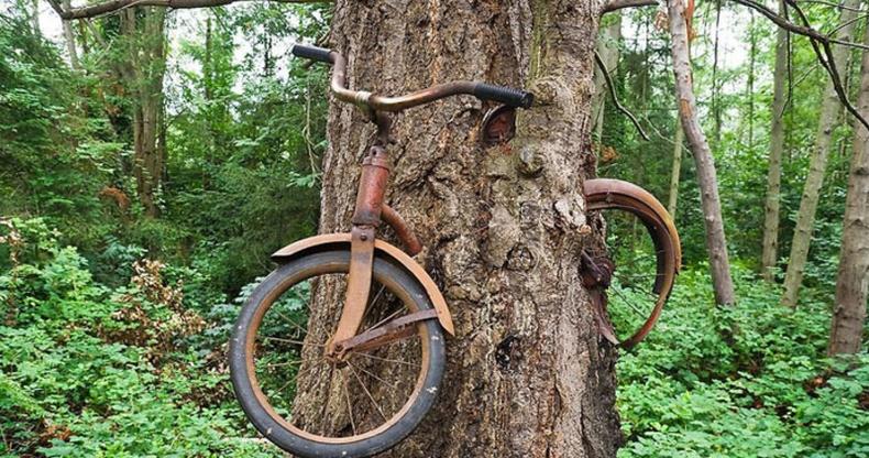 """""""Модтой хамт ургасан дугуй""""-ны цаана ямар түүх нуугддаг вэ?"""