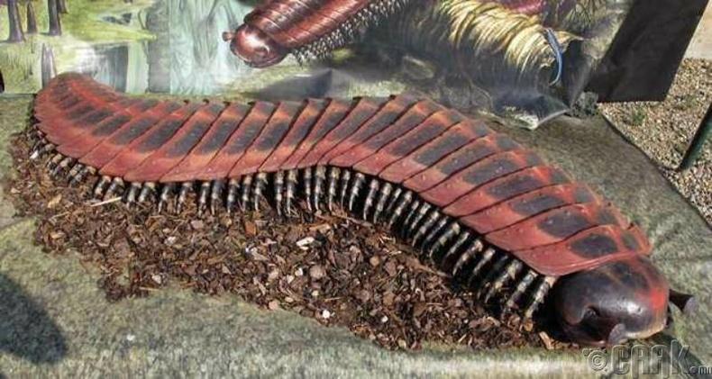 Артроплевра - Аварга жаран хөлт