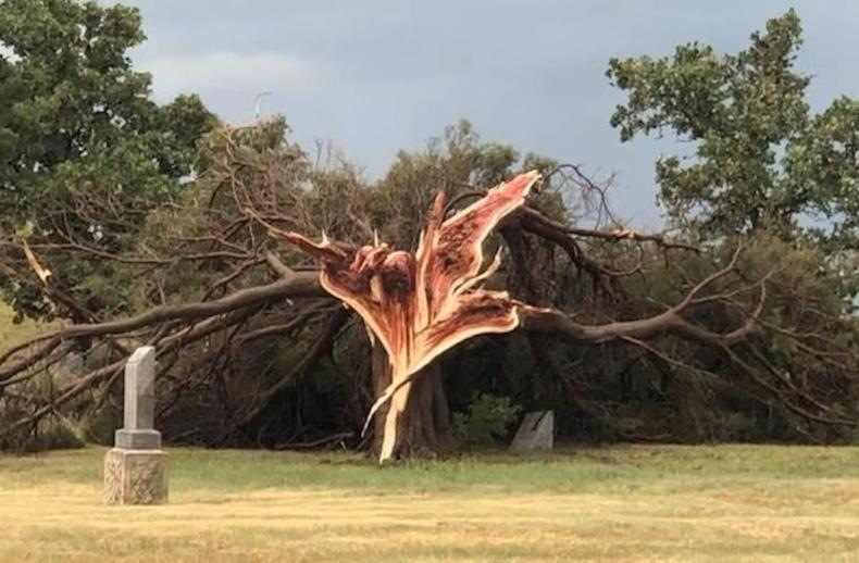 Аянганд цохиулсан мод